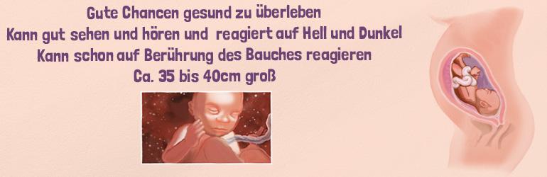 Die 28. Schwangerschaftswoche